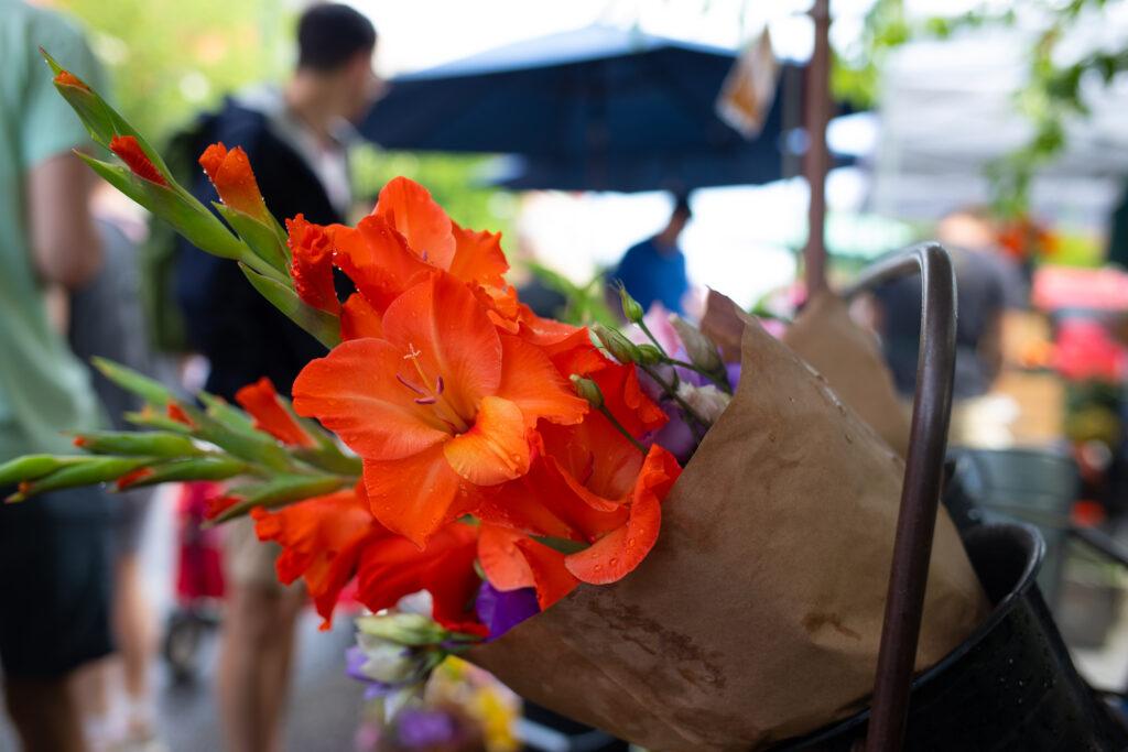 gladiolus stems with rain drops