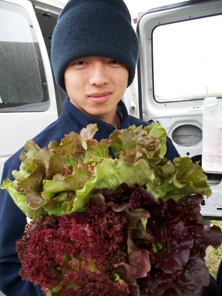 Spring Lettuce